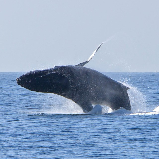 Humpback Whale. ©Tim Hauf, timhaufphotography.com