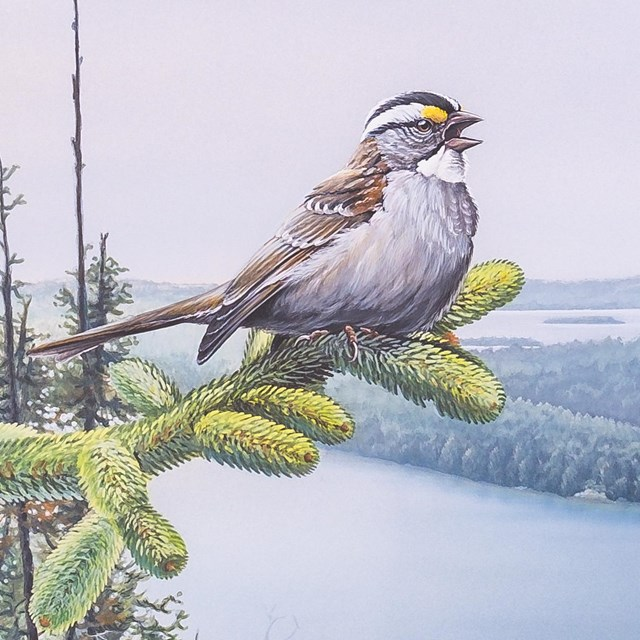 Artwork shows a white-throated sparrow high above a lake scene