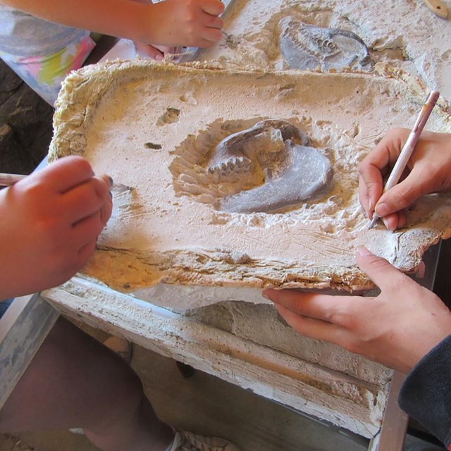 students use dental tools to dig away at plaster around fake fossils during a field trip