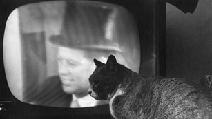 A cat sits in front of a television with John F. Kennedy's image displayed. Black and White.