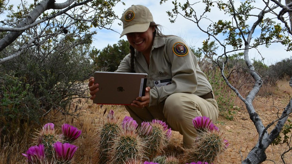 A ranger with a tablet