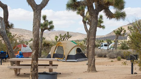 tents, a fire ring, and a picnic table among Joshua trees