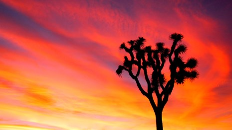 a silhouette of a tall, spiky plant against a vivid sunset sky