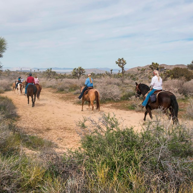 A number of people riding horses on a dirt trail.