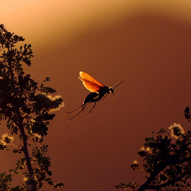 an insect in flight, with long trailing legs