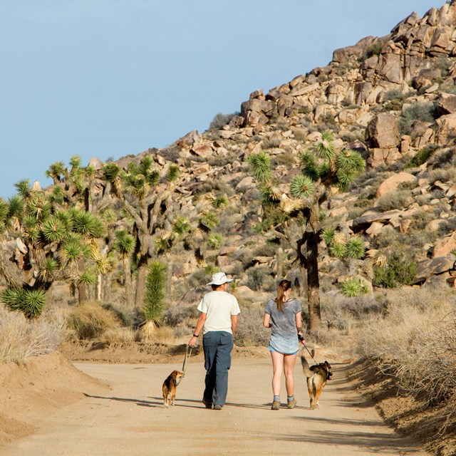 Color photo of visitors walking their leashed dogs on a dirt road. NPS / Brad Sutton