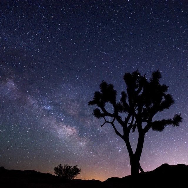 night scene with the stars of the Milky Way beyond a silhouetted Joshua tree