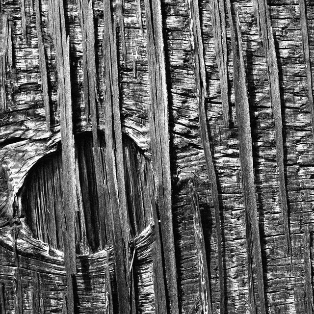 Black-and-white photo of wood grain at close proximity.