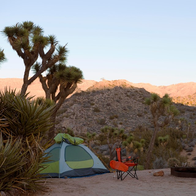 Color photo of a tent campsite set up at dusk with a Joshua tree overhead.