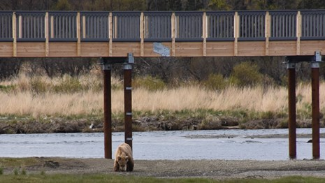 One bear feeds beneath an elevated bridge.