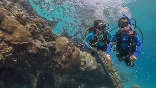 Two people in diving gear move around a reef.