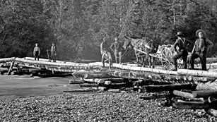 Black and white photo of people and horses on a log bridge.
