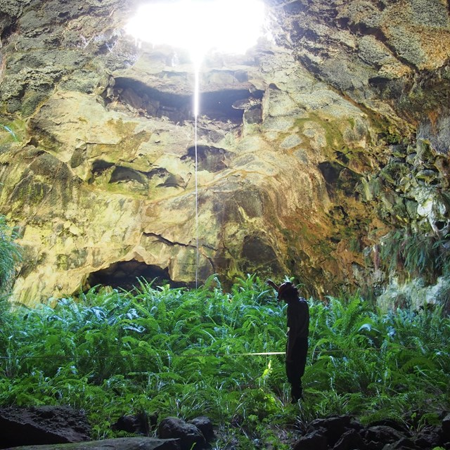 NPS staff monitoring in cave with light coming through ceiling to vegetation on cave floor