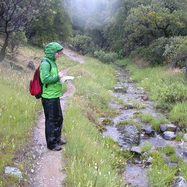 Person standing on trail in the rain at Whiskeytown NRA recording data on a GPS unit