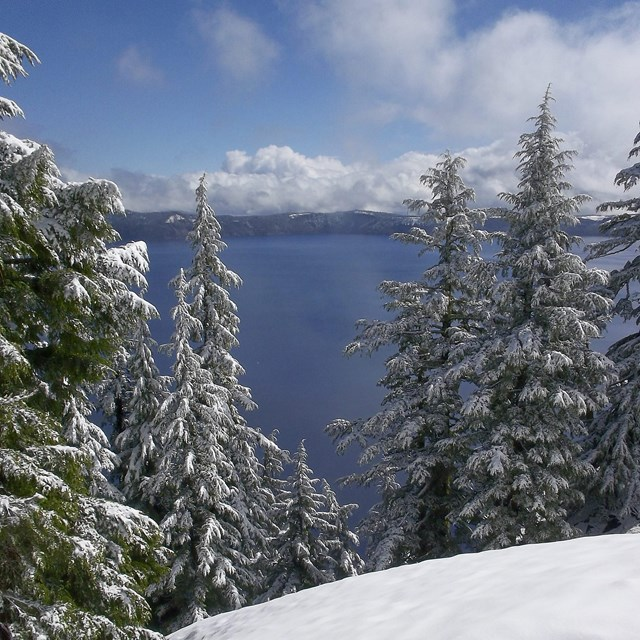 Snow covered landscape view of Crater Lake with trees in foreground