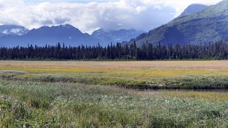 a sedge meadow and mountains