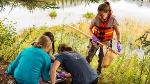 Students study dragonfly larvae near a pond