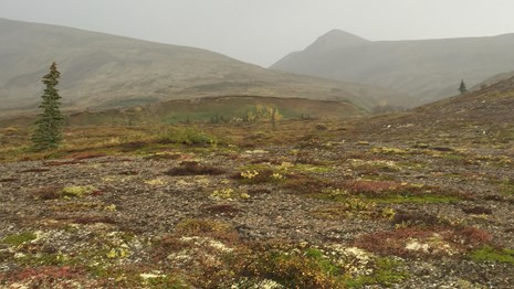 Image of tundra with fog in the background.