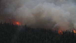 photo of a fire burning in an evergreen forest of spruce trees.
