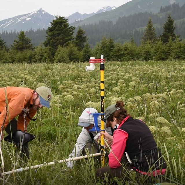 3 scientists look survey something in a meadow
