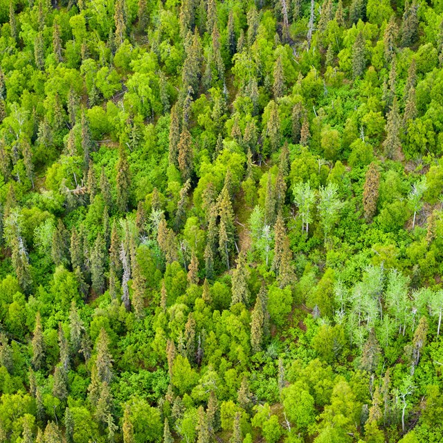 green trees from above