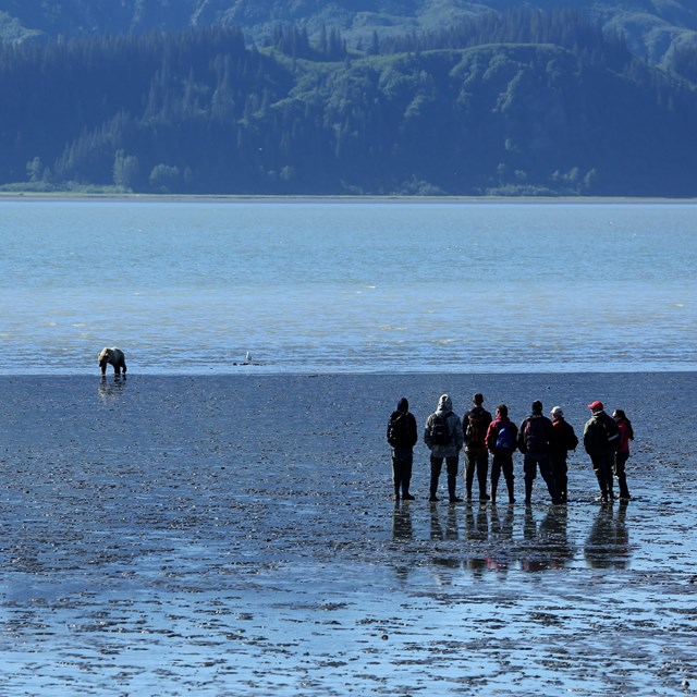 a group of 7 people watch a bear from a distance on an ocean beach