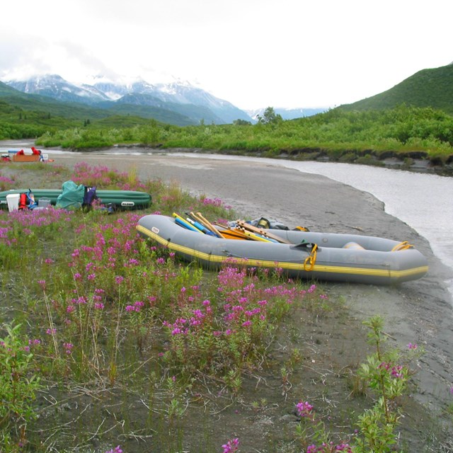 A raft sits on a river shore amdist the fireweed blooms