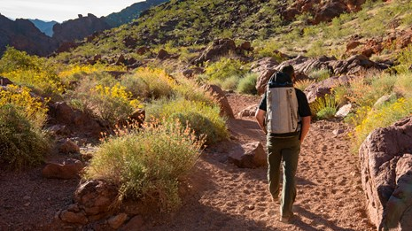 Man walking though the desert with flowers blooming.