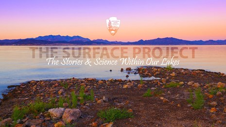 The Surface Project