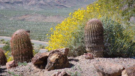 Nature at lake Mead