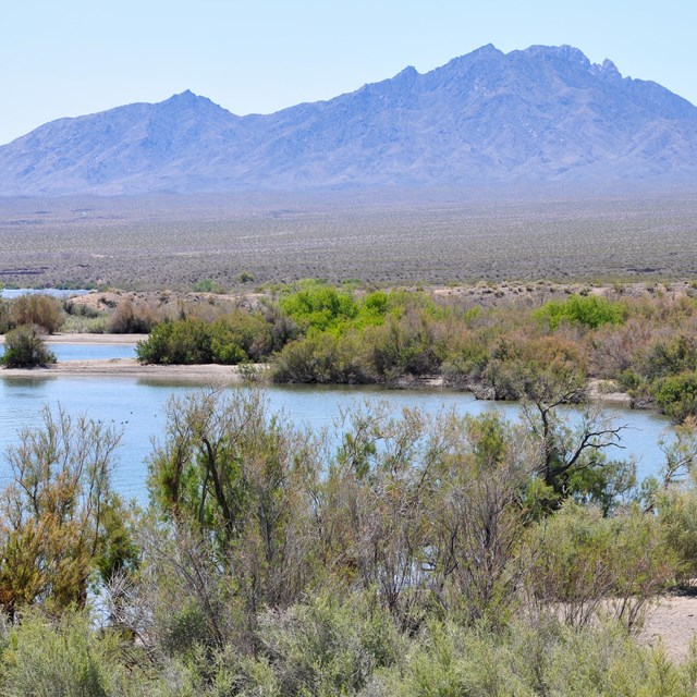 A marshy looking lake with desert mountains in the backdrop.