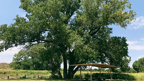 Campsites at Plum Creek campground on a sunny day with large green cottonwood trees.