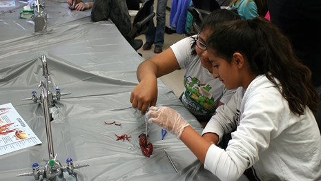 Two girls dissect a crayfish at the Student Science Symposium.