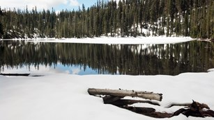 A lake reflecting conifer trees edged by white snow.