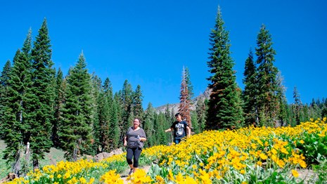A woman and a young man hike downhill through thick yellow wildflowers