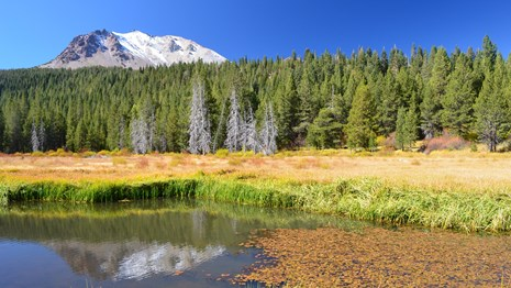 Lassen Peak reflected in pond lined by yellow grasses and orange leaves