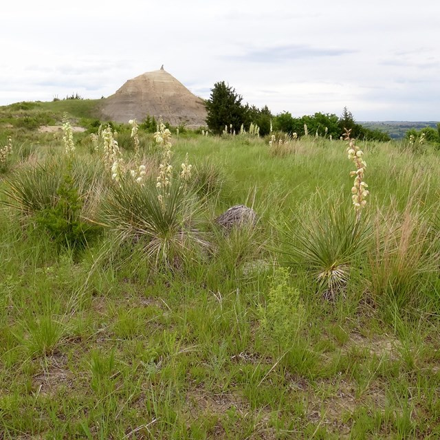 Sand hill surrounded by grasses