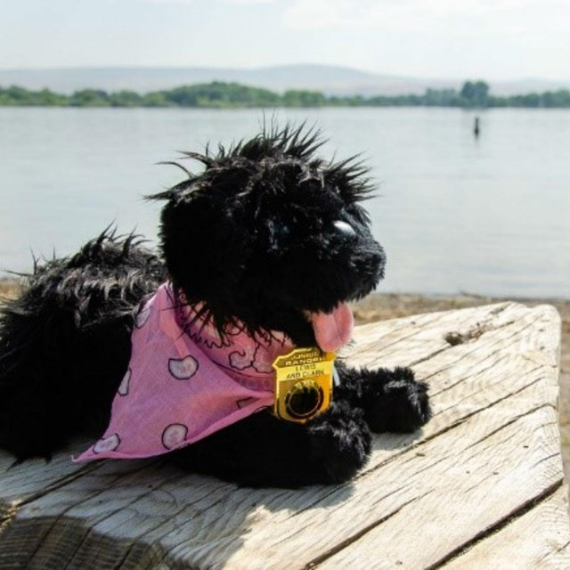 toy dog near water