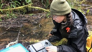 Biologist test water quality next to a stream