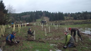 Volunteers plant trees in an estuary habitat on a rainy day