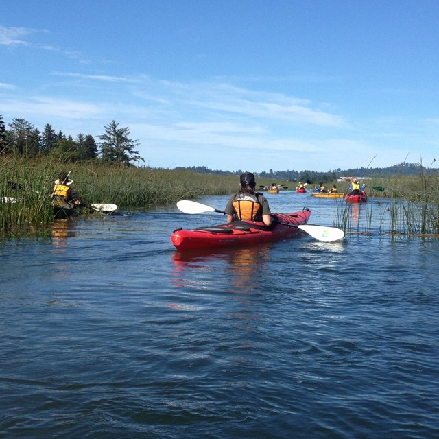 Guided Kayak tours on the Lewis and Clark River and surrounding wetlands