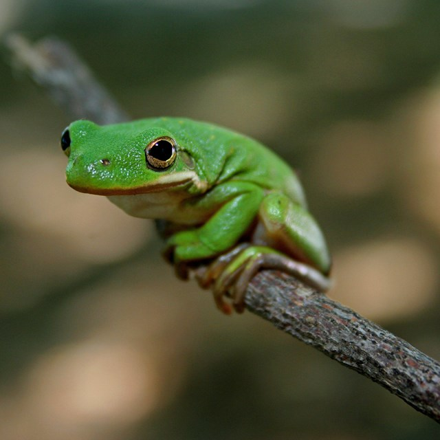 A frog sitting on a branch