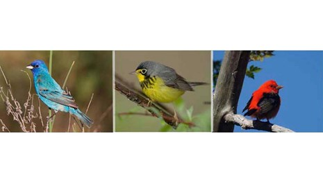 Three pictures of birds