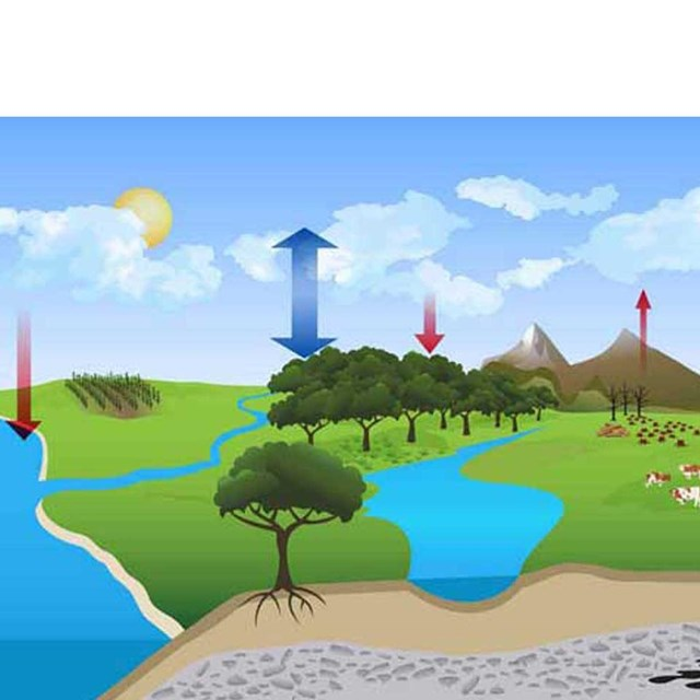 Graphic diagram of Carbon cycle