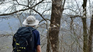 Hiker gazes from scenic forest overlook in the Mammoth Cave