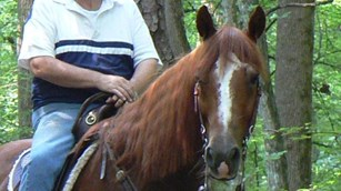 Close shot of horse standing in a brightly wooded area.