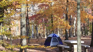 A tent surrounded by autumn foliage.