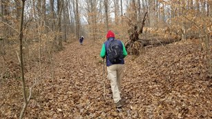 Two hikers hike of a trail covered in leaves.