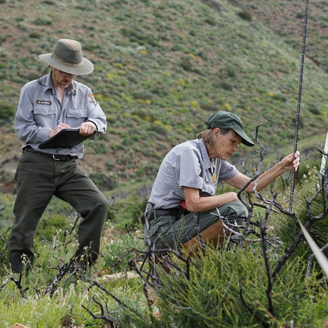 Park staff recording native plant communities data on a Santa Monica Mountains hillside