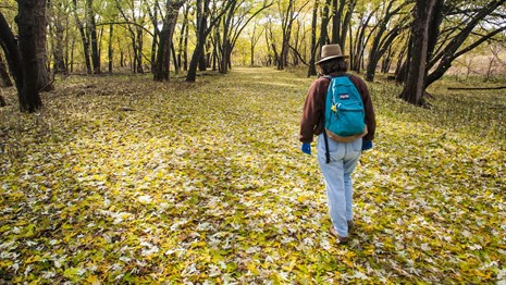 A woman walks a path through a forest of colorful leaves.